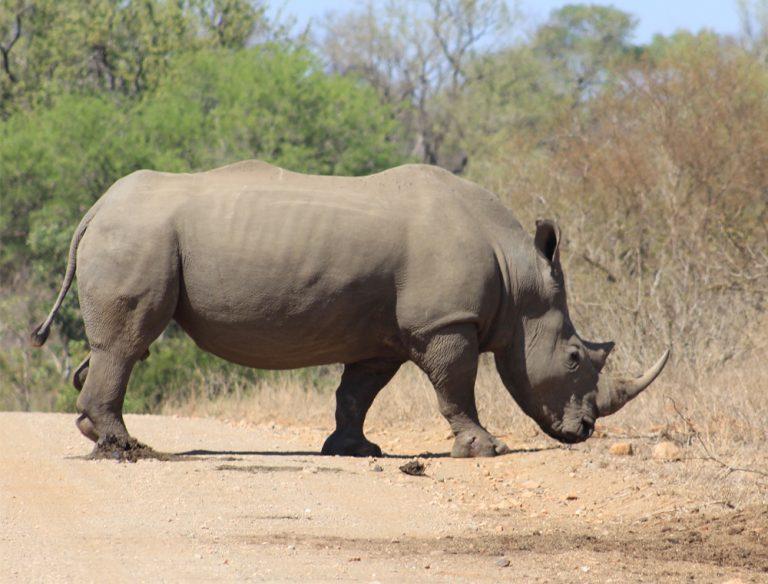 #bushhappyoverlanding